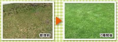 芝生管理例